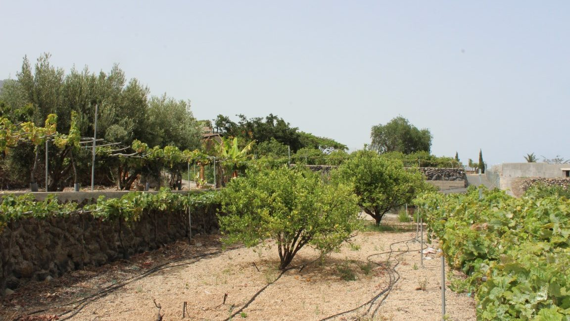 arafo country house (3)