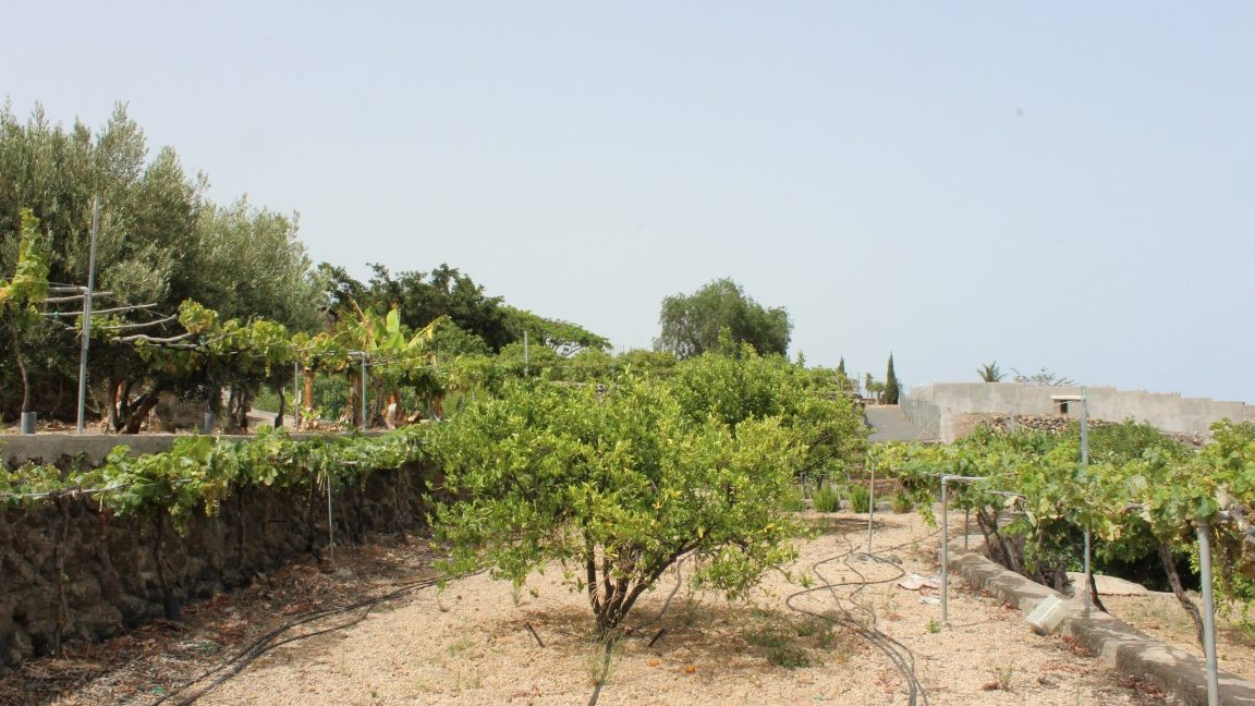 arafo country house (7)