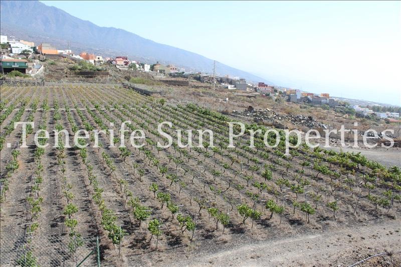 arafo vineyard (11)