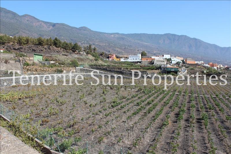 arafo vineyard (12)
