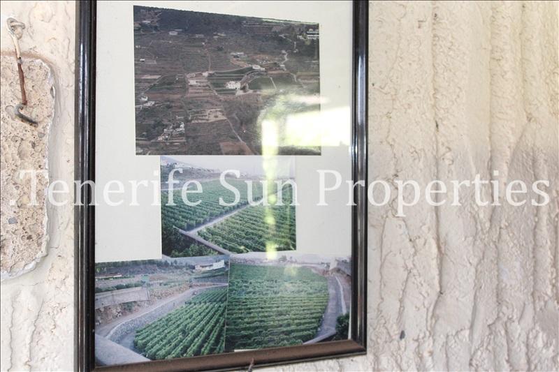 arafo vineyard (19)