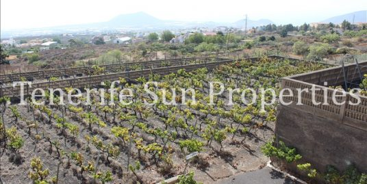 Vineyard For Sale Arafo Tenerife