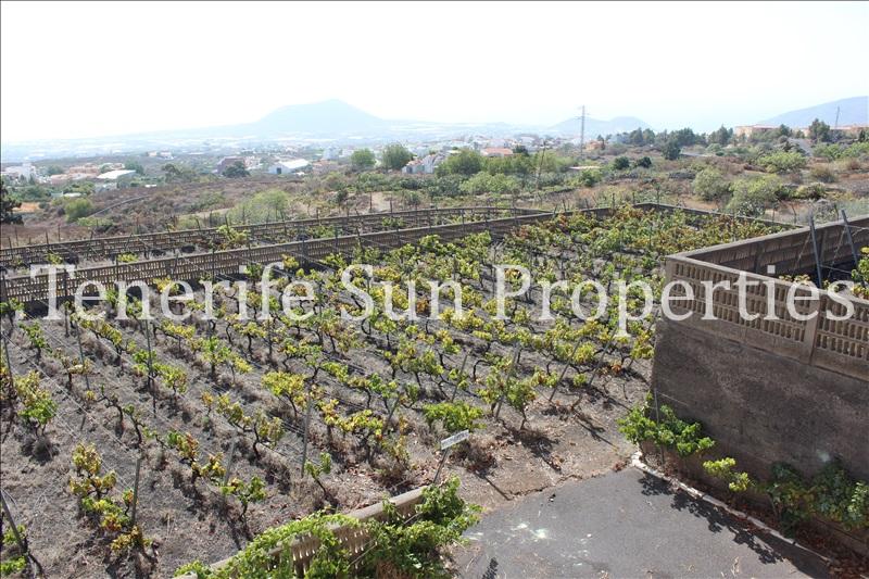 arafo vineyard (20)