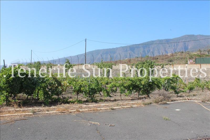 arafo vineyard (3)
