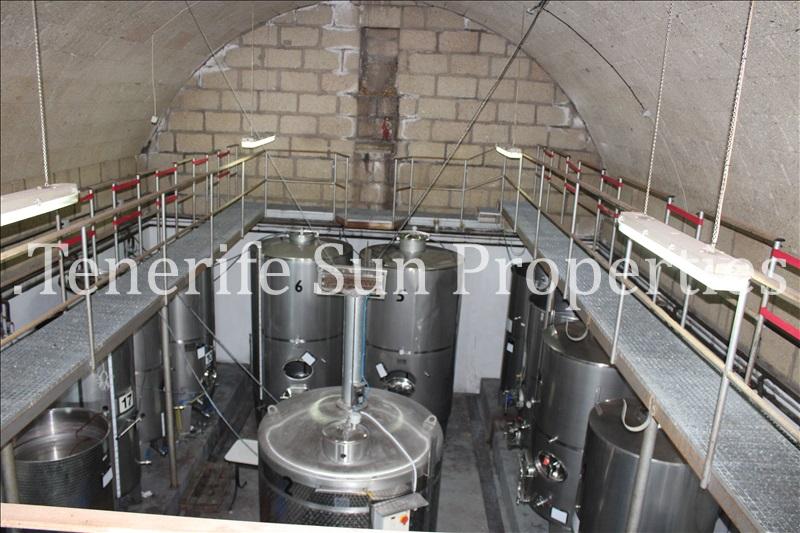 arafo vineyard (36)