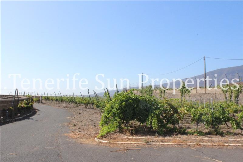 arafo vineyard (4)