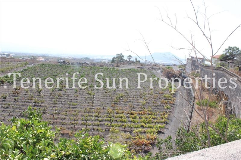 arafo vineyard (5)