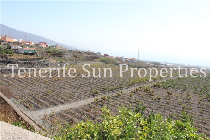 arafo vineyard (6)