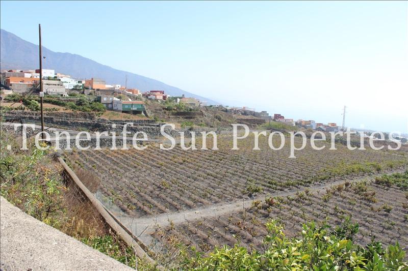 arafo vineyard (7)