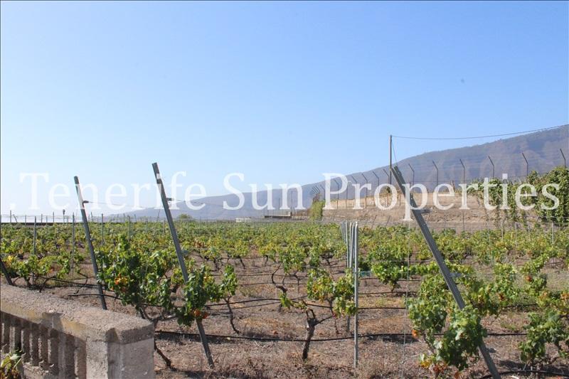 arafo vineyard (8)