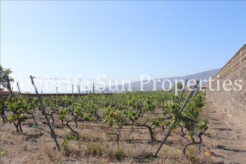 arafo vineyard (9)